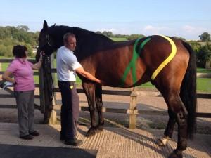 taping bij paarden