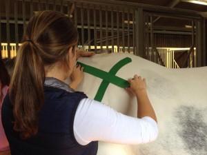 medical taping bij paarden